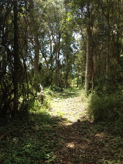 Tree Passage